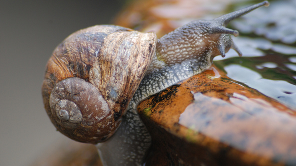 Snail reaches her limits.